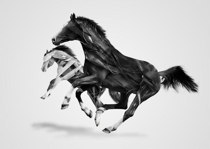 06 - Justin M Maller - képszerkesztés - horses3
