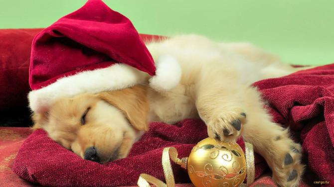 Csurga - Aranyos karácsonyi kutyás hátterek 3