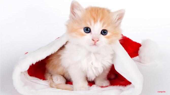 Karácsonyi macskás cicás hátterek - Csurga 4