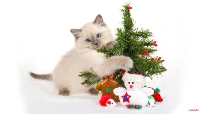 Karácsonyi macskás cicás hátterek - Csurga 7